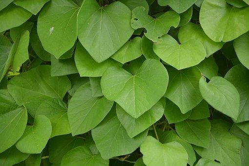 leaves-2469514__340.jpg